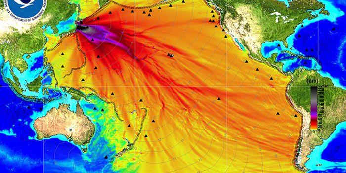 Le radiazioni di Fukushima hanno contaminato l'intero Oceano Pacifico