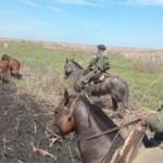 La Policía Rural de Saín desarticuló bandas dedicadas al robo de ganado