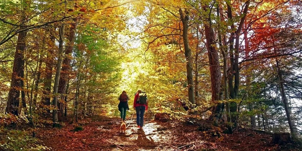 escursionisti nel bosco autunnale