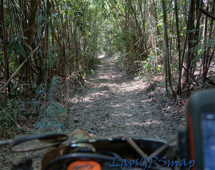 Ho Chi Minh Trail Sihanook-trail bamboo forest