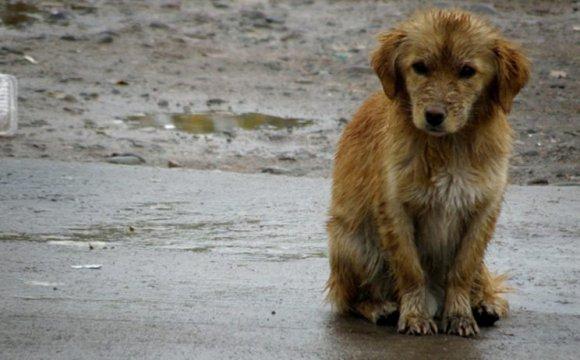 Abren comederos comunitarios para perros callejeros en