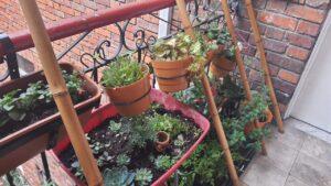 La relación entre la herbología, las huertas y la salud: Chapinero localidad pionera