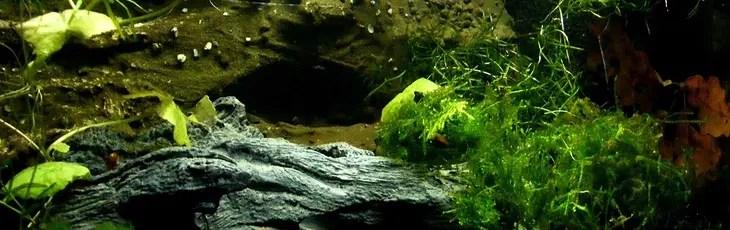 Bel aquarium planté