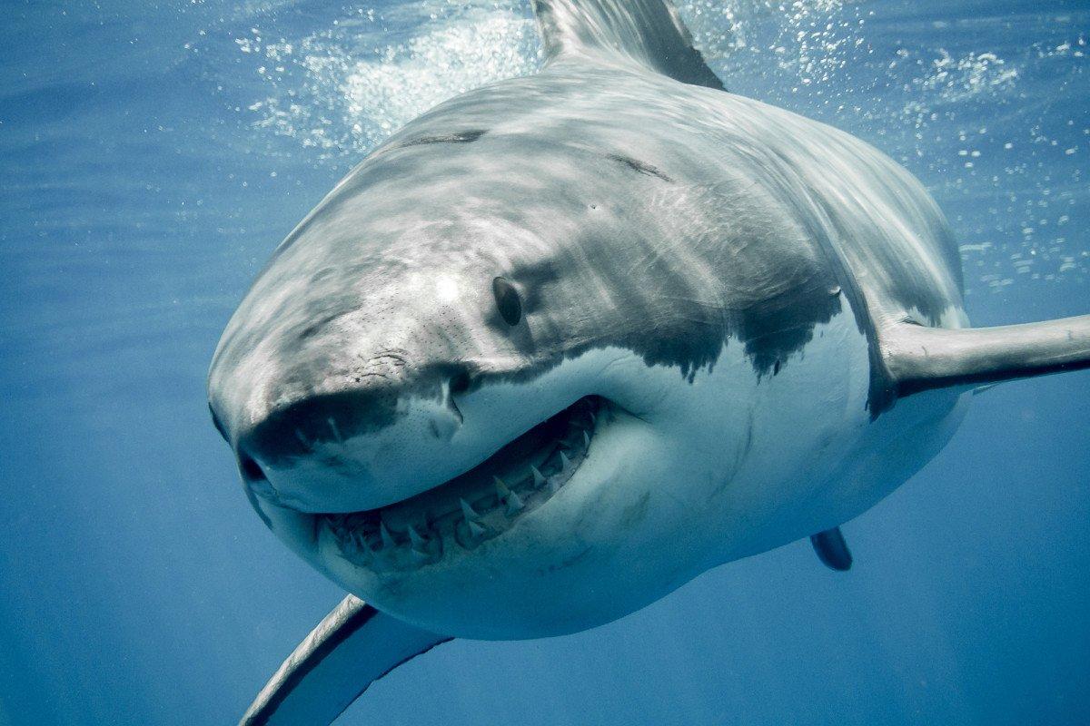 Turista de 65 años muere al ser mordido por un tiburón