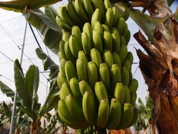 Früchtevernichtung
