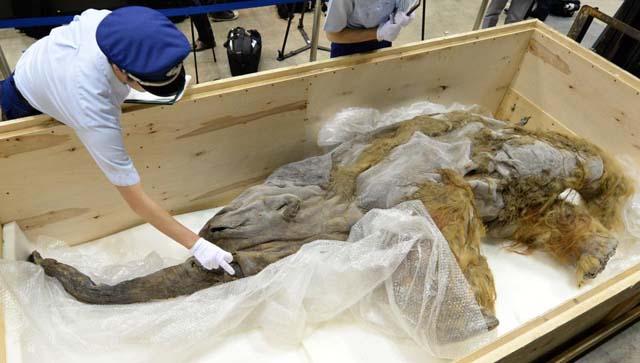 mamut yuka AFP