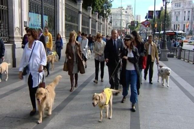 Perros Guias / 20minutos.es