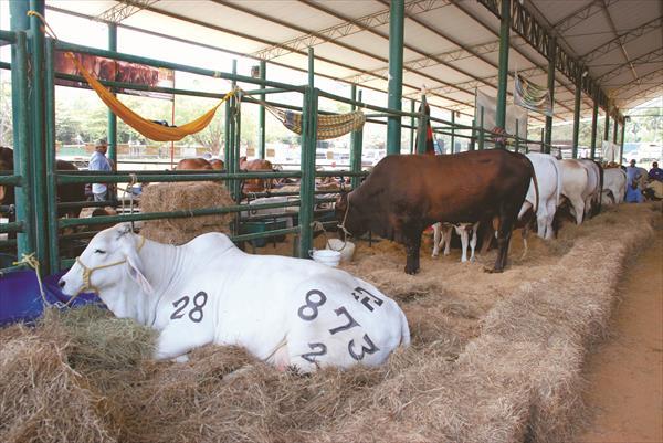 produccion leche
