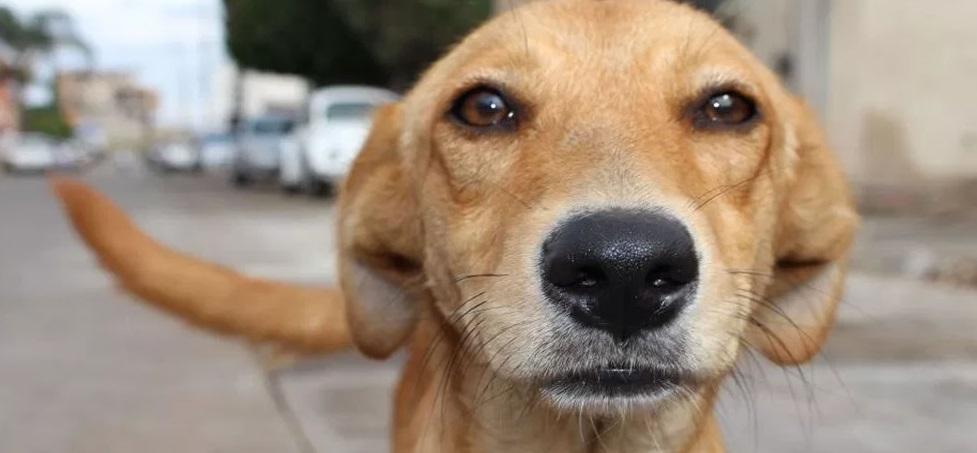 Compró pastillas para envenenar perros y por error terminó tomándoselas