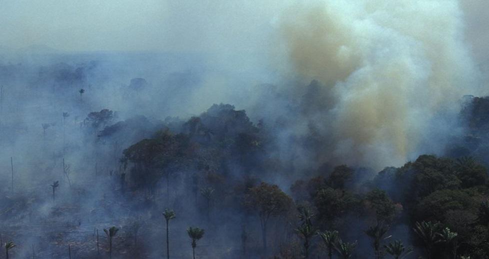 Deforestación de la Amazonía en su peor nivel desde 2008