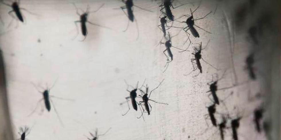 Confirma Salud 40 casos de dengue en el estado