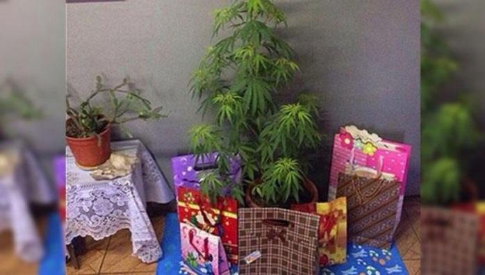 Arrestan a pareja por decorar planta de marihuana como árbol de navidad