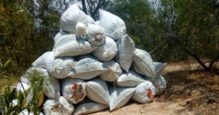Asegura Sedena 900 kilos de marihuana en Guadalupe y Calvo