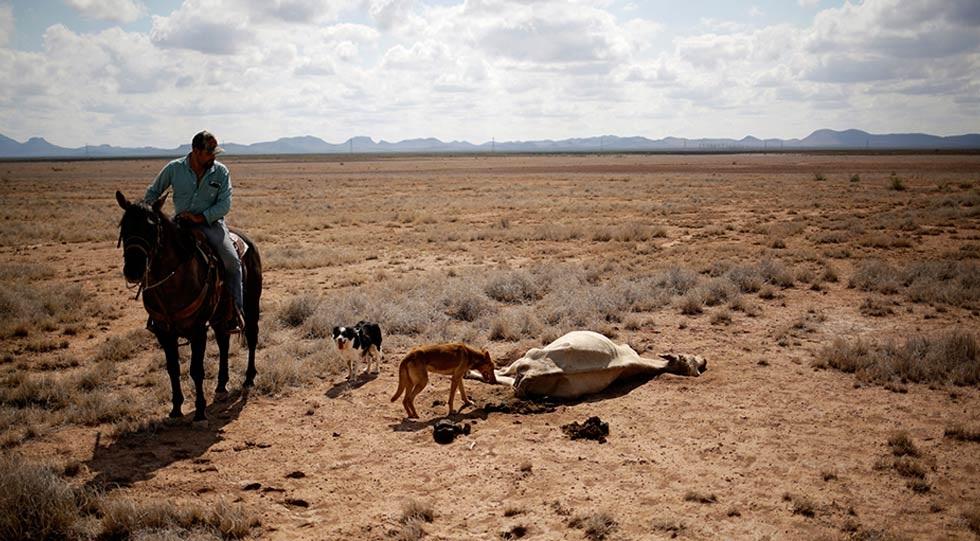 Incalculables daños económicos provocados por la sequía