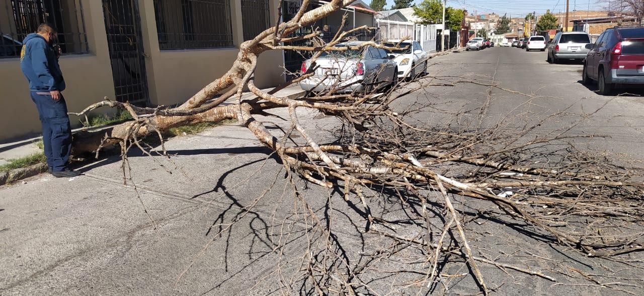 Se registran ráfagas de viento de hasta 85 km/h por paso de Séptima Tormenta Invernal