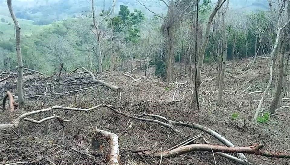 Revelan daño forestal de Sembrando Vida