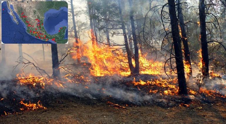 8 incendios forestales en Chihuahua; uno permanece en Papigochic