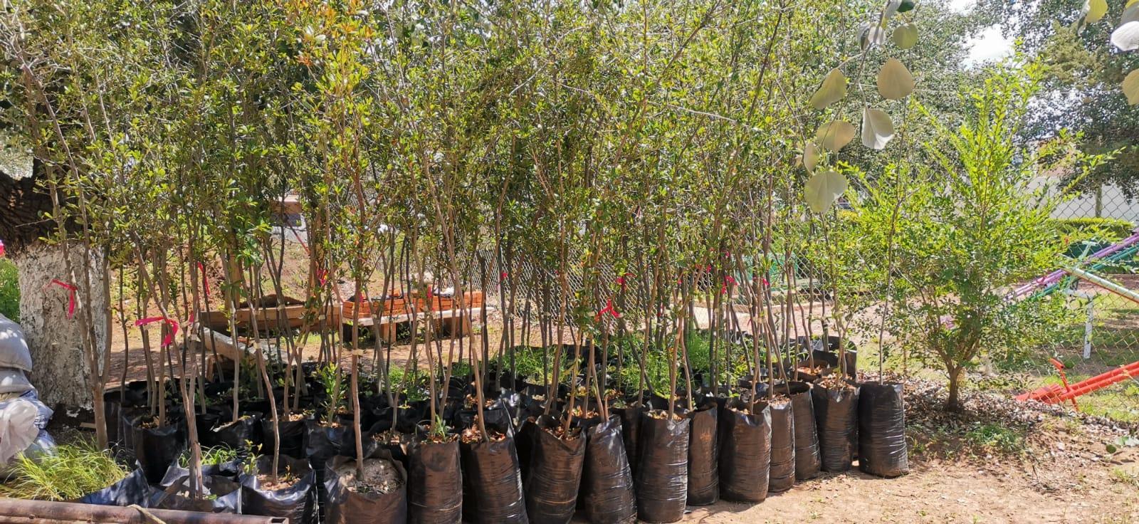 """Llegan árboles para el programa """"Plantemos vida en el centro de Cuauhtémoc"""""""