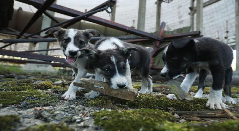 Incendio acaba con la vida de 75 perros en Texas