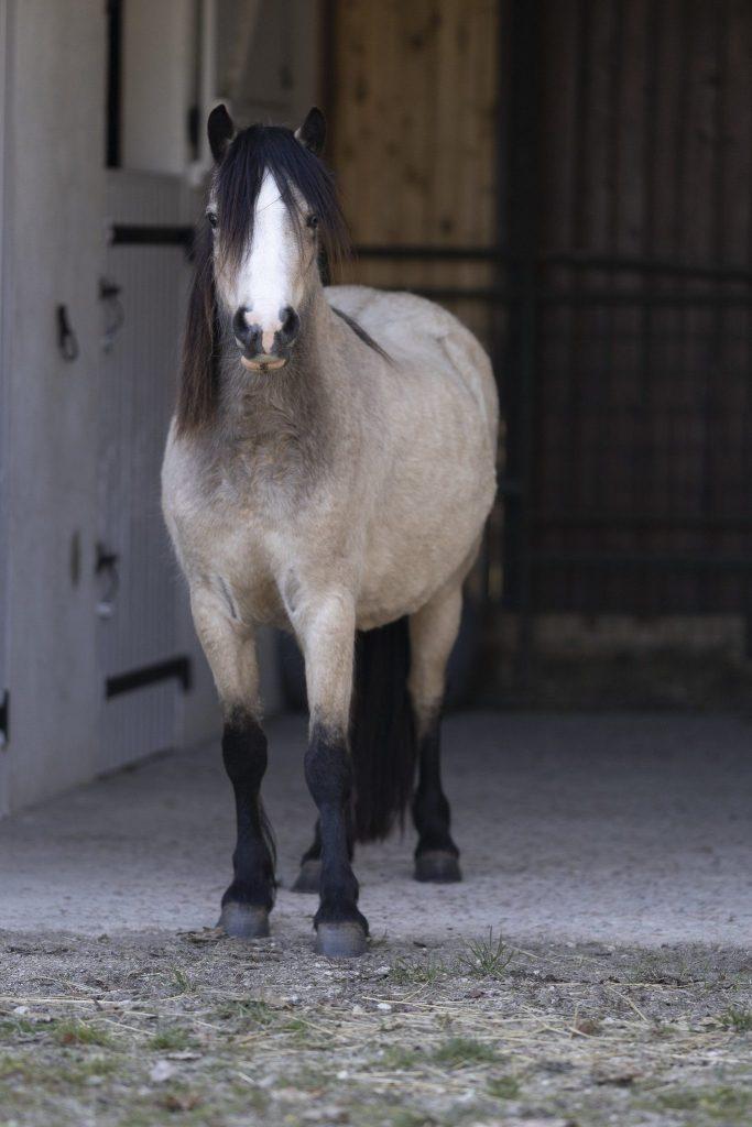 Photo cheval fond noir avant retouche