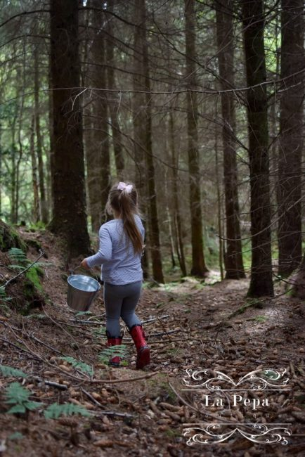 Foraging   What You Should know about Collecting Wild Mushrooms