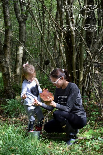 Foraging | What You Should know about Collecting Wild Mushrooms 1
