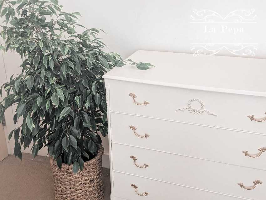 Green Living | My Favourite Air Purifying Plants 5