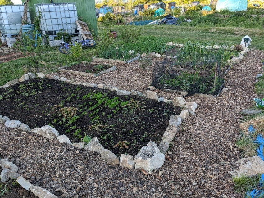 Green Living | My First Year on The Allotment 139