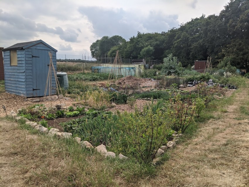 Green Living | My First Year on The Allotment 145