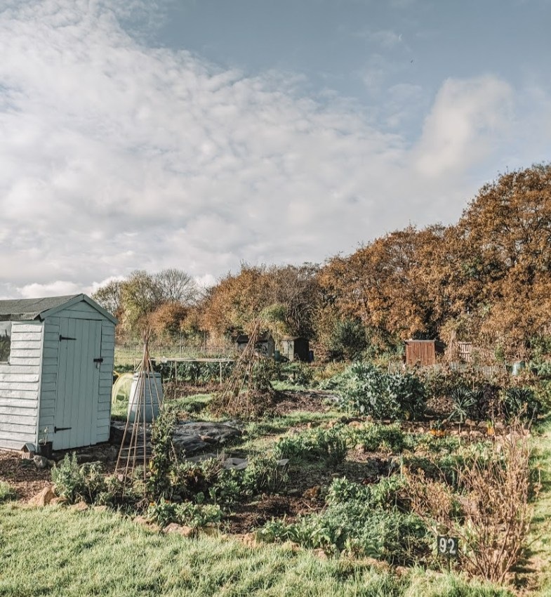 Green Living | My First Year on The Allotment 184