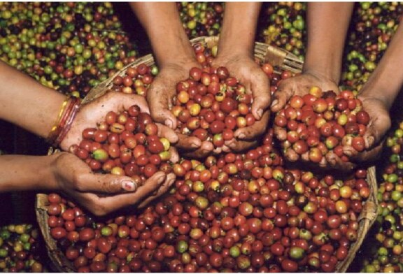 """Chiapas – Sur la route du café, les fincas de """"l'or noir"""" (reportage vidéo)"""