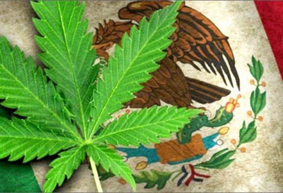 La Cour suprême du Mexique ouvre la porte à la légalisation du cannabis !