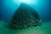 Baja California – Les récifs de Cabo Pulmo reprennent vie !
