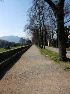 passeggiata mura, Lucca [CC-BY-SA-3.0]