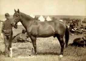 """Il cavallo """"Comanche"""", unico sopravvissuto di Little Big Horn, recuperato dalle truppe statunitensi"""