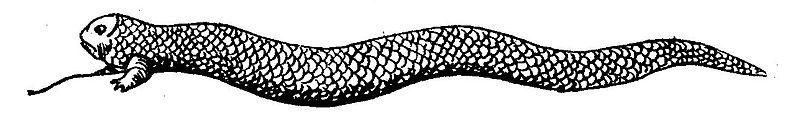 Tatzelwurm_1841