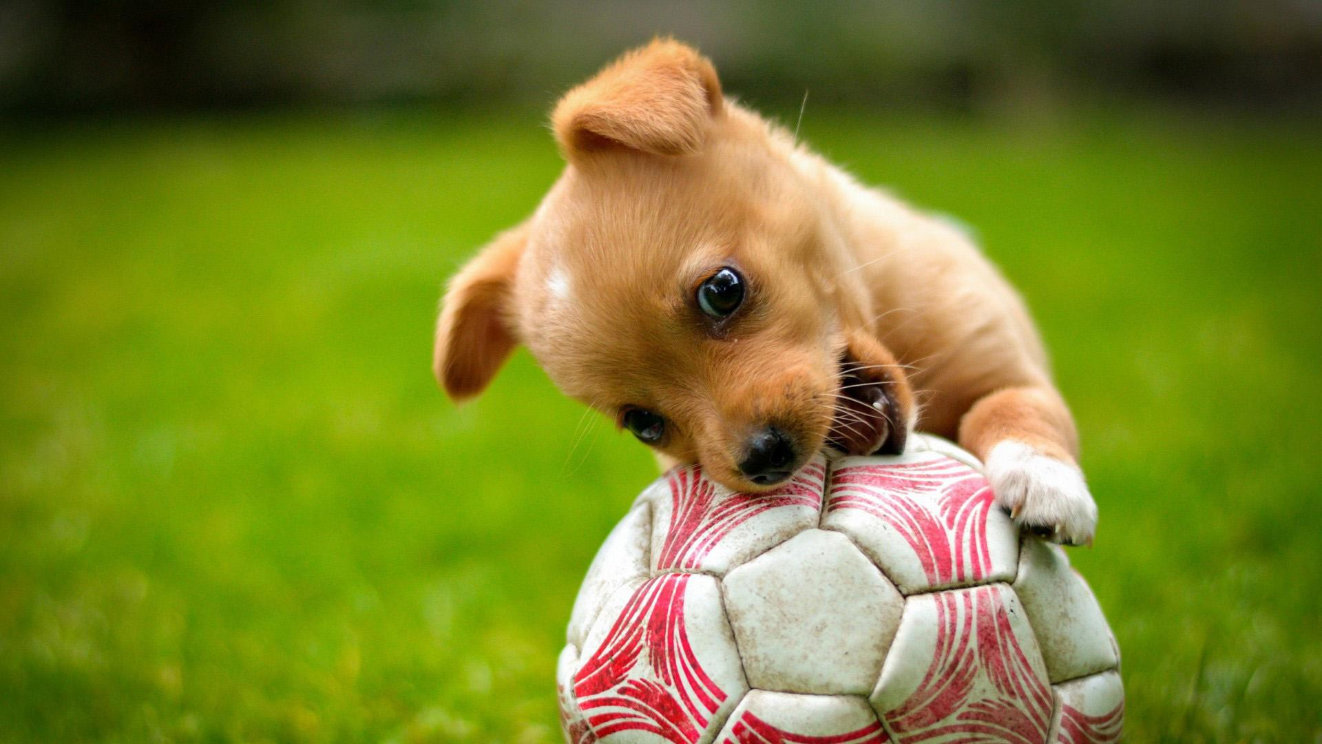 Cute Animals Playing Soccer Wallpaper Teniatko Lapvet