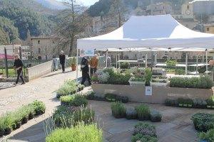 Azienda Agricola San Martino a la Quarta di Scheggino