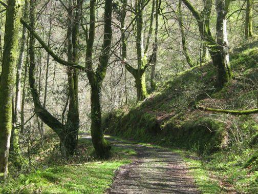 hayedo del Bosque de Cea