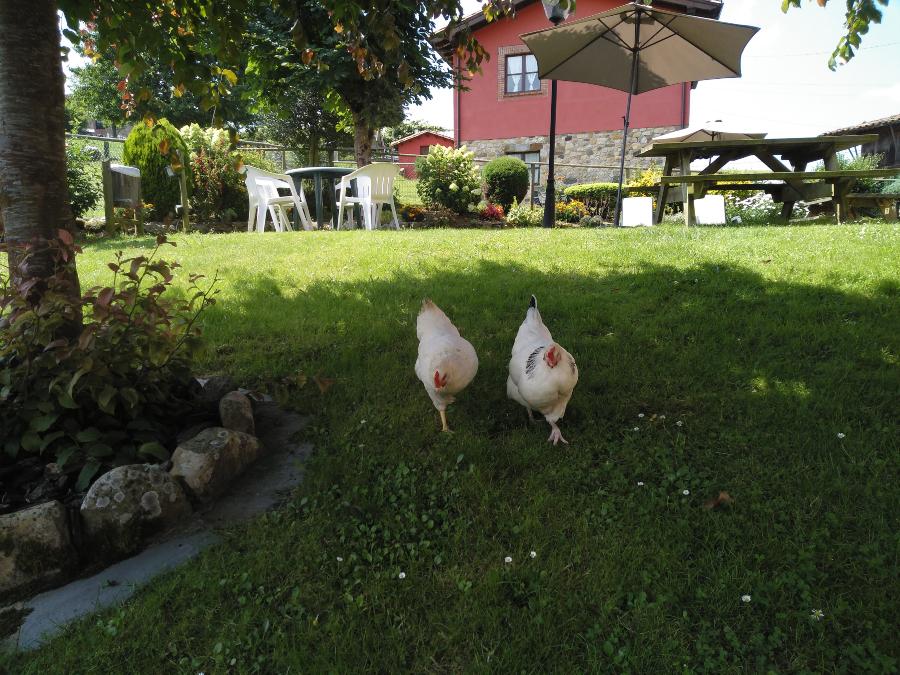 Asturias con niños, apartamentos en Picos de Europa con animales propios