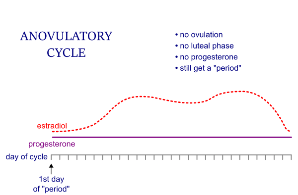 Anovulatory cycle