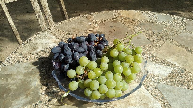 dieta de la uva