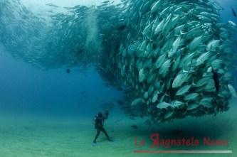 Giornata di pesca...