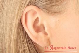 orecchie1