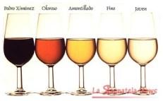 vino spagna 4
