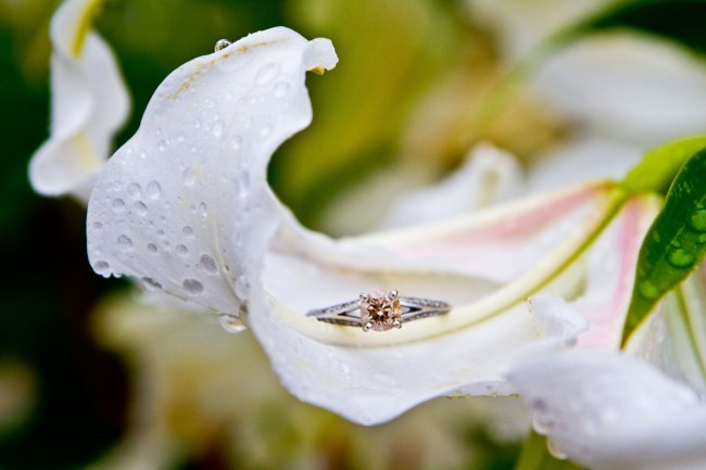brown diamond engagement ring sits on a dewy flower