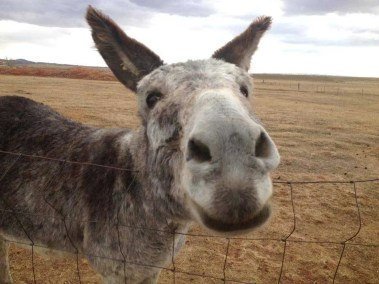 our-animals-caeser-the-donkey