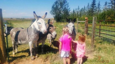 our-animals-meeting-donkeys