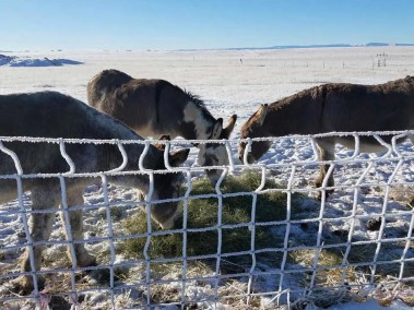 our-animals-frosty-donkeys