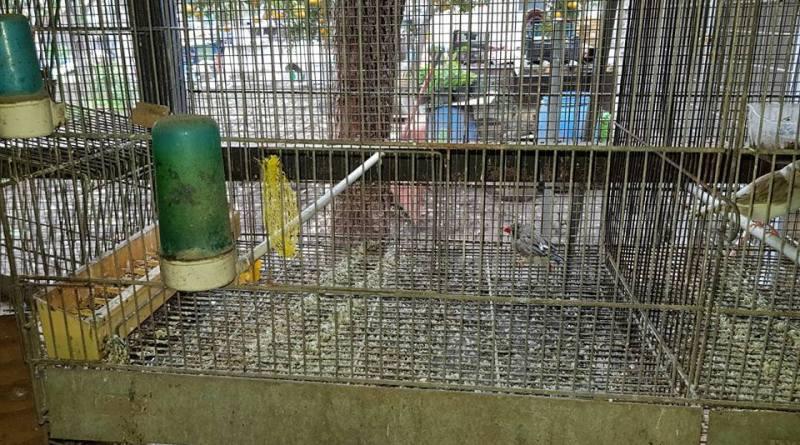 Sant'Anastastia. Detenzione illegale di fauna protetta: blitz Guardie Zoofile AgriAmbiente
